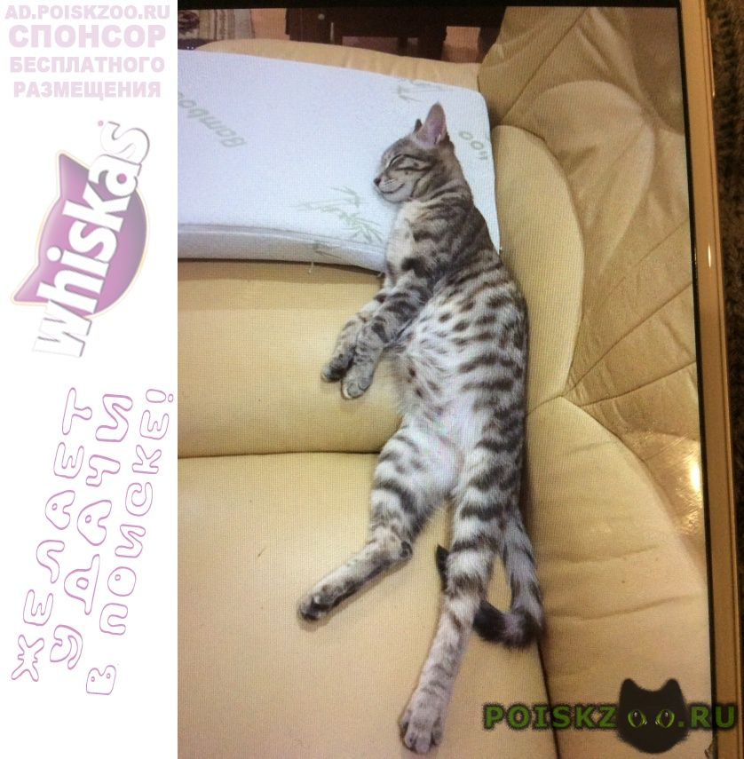 Пропала кошка г.Владивосток