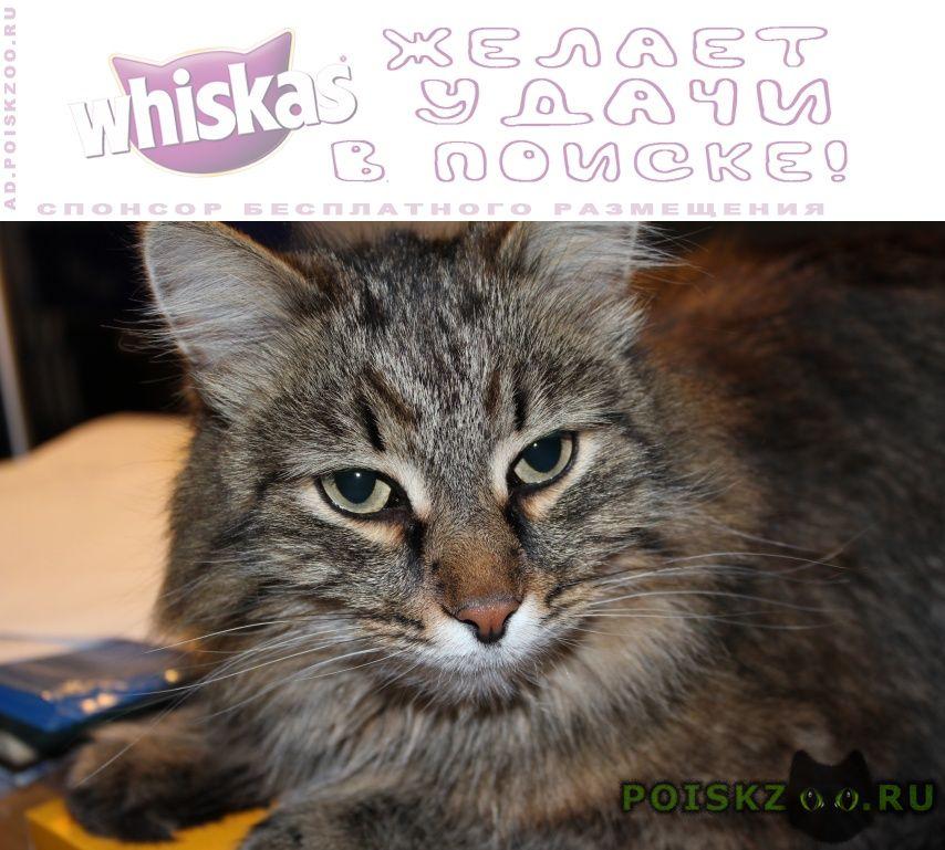 Пропал кот г.Магнитогорск