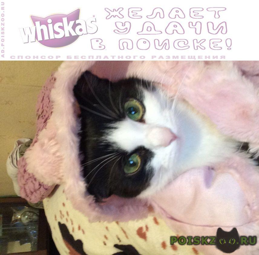 Пропала кошка черно белая г.Химки