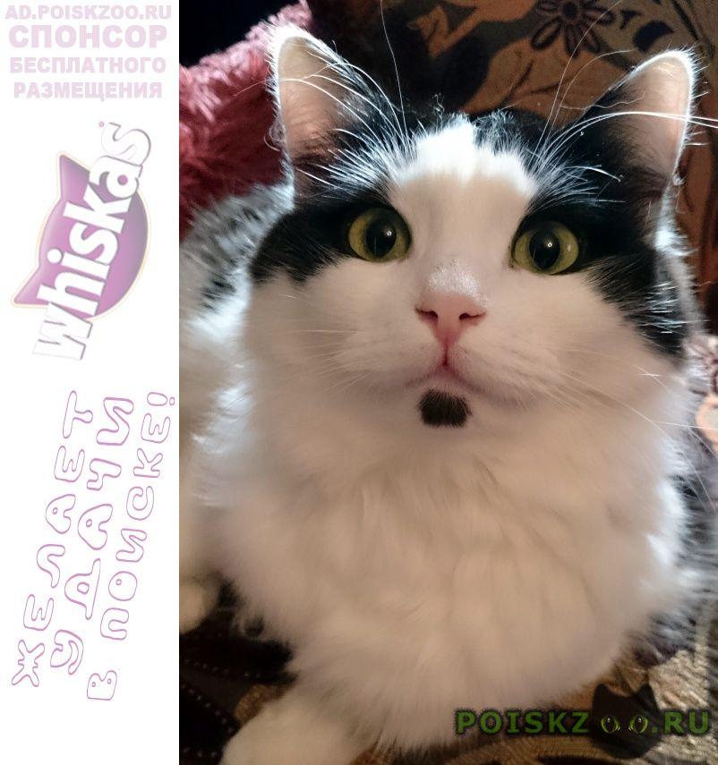 Пропала кошка г.Балашиха