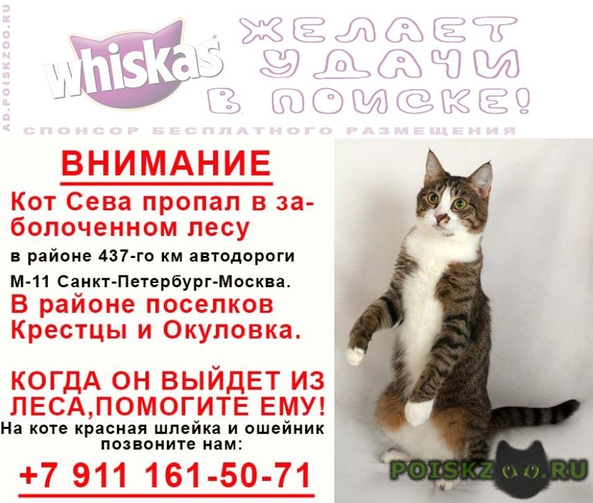 Пропал кот в лесу возле автодороги м-11 у окуловки г.Окуловка