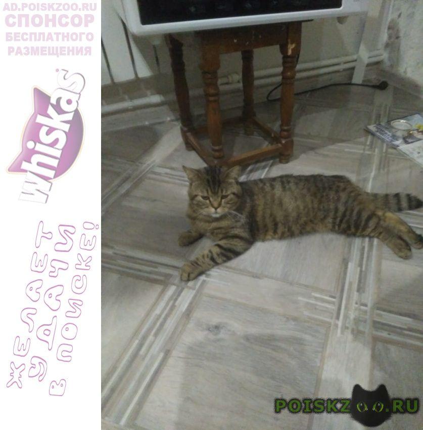Пропал кот помогите найти он не долечился г.Анапа