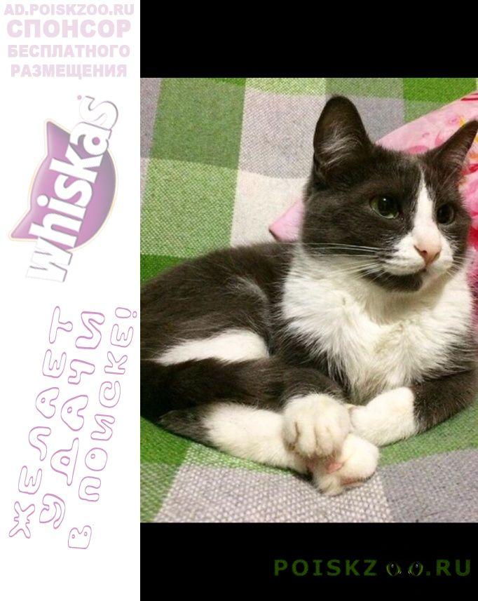 Пропала кошка 16июля г.Екатеринбург