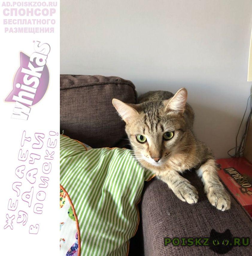 Пропал кот, возраст год г.Москва