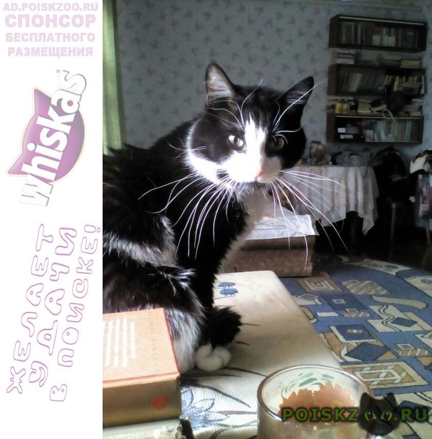 Пропал кот саблино, ульяновка г.Тосно