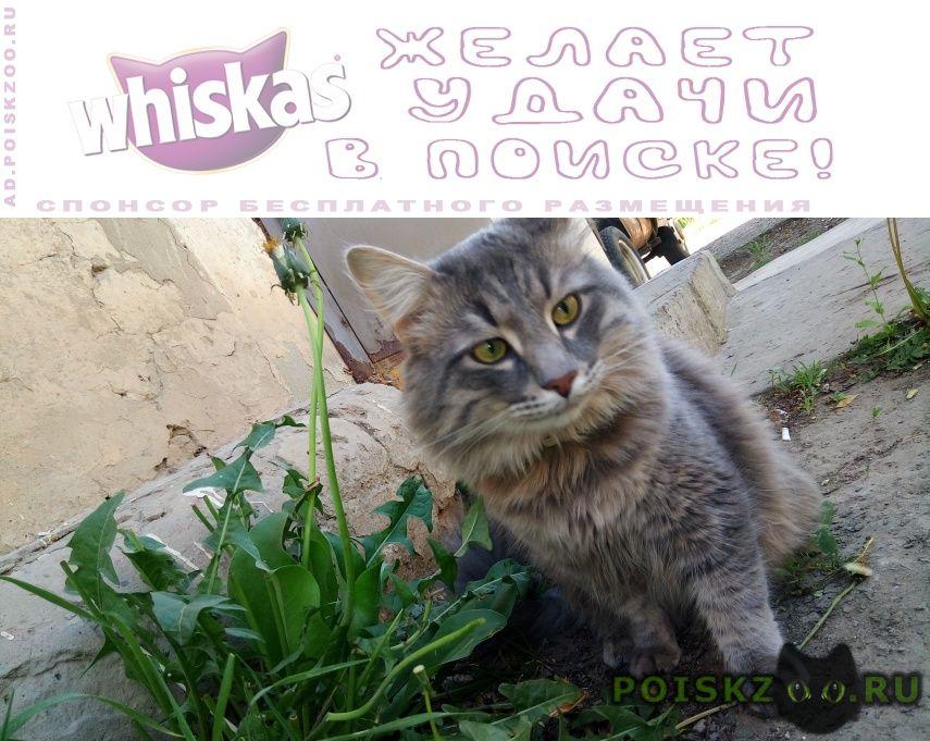 Пропал кот г.Астрахань