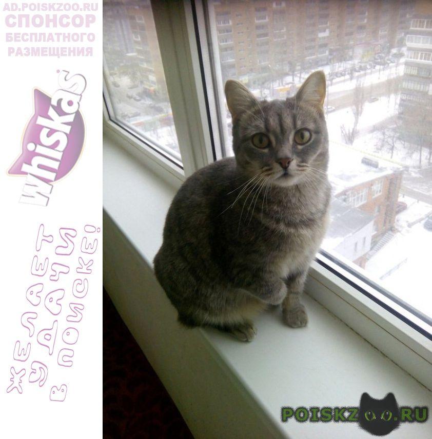 Пропала кошка с больной лапкой. г.Москва