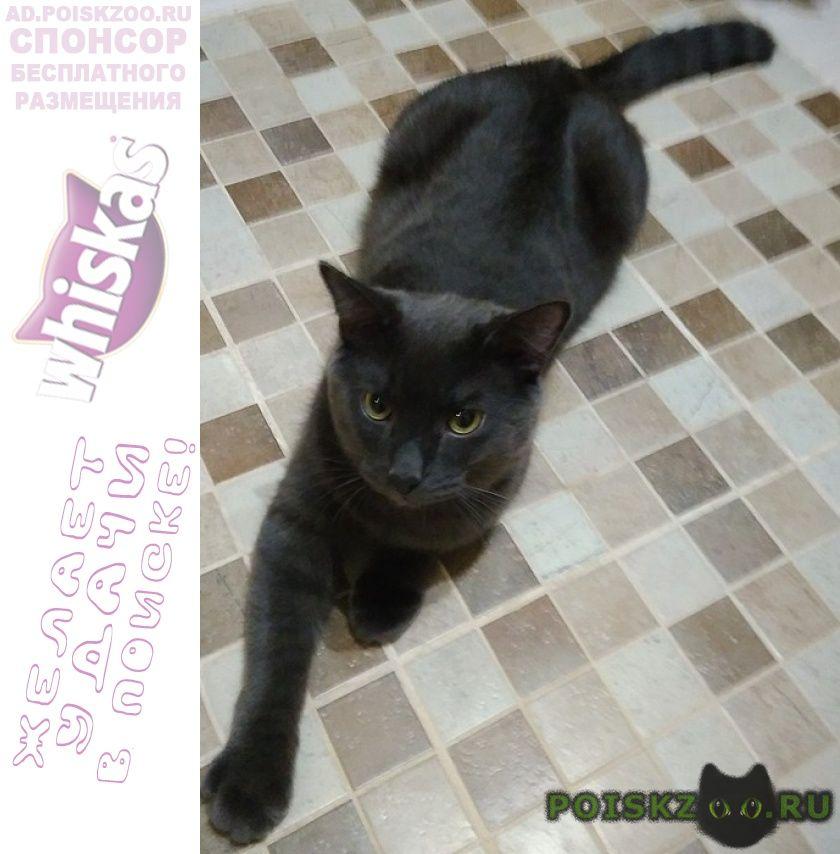 Пропала кошка серый кот район южного автовокзал г.Екатеринбург