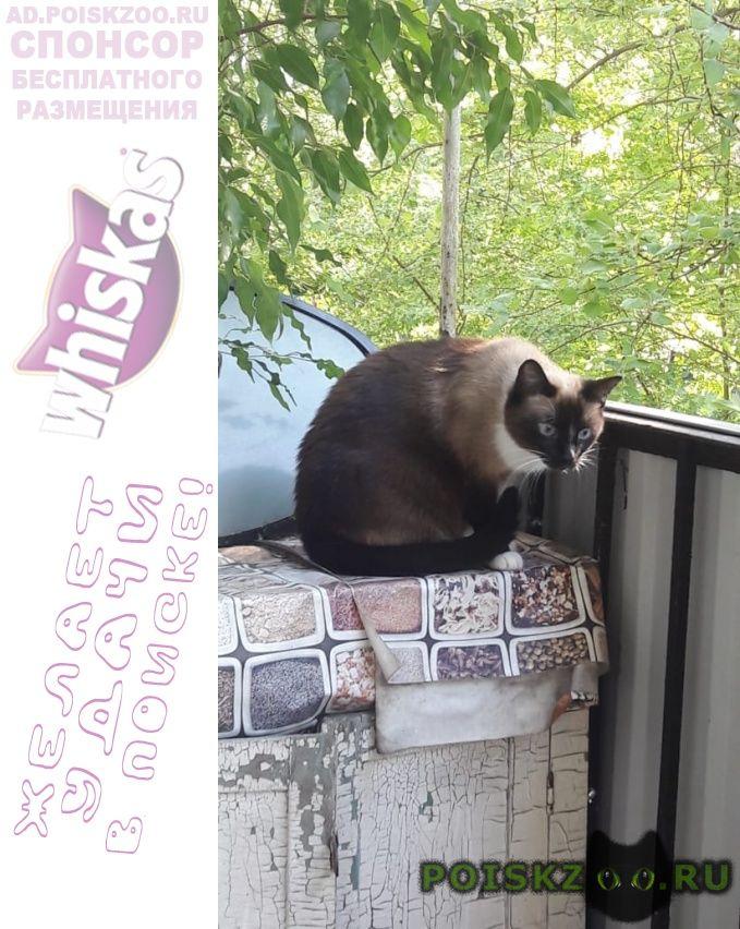Пропала кошка открытое шоссе г.Москва