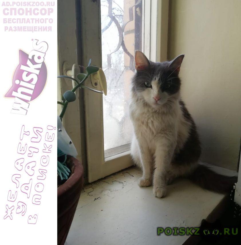 Пропал кот г.Железнодорожный (Московск.)