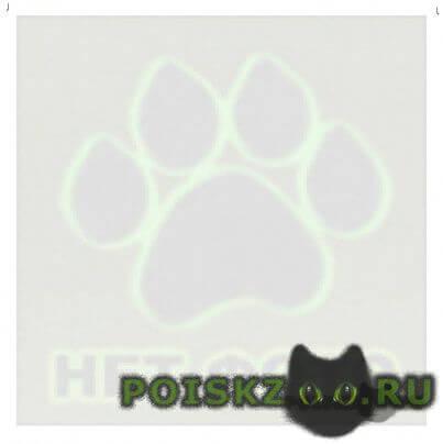 Пропала кошка верните за вознаграждение г.Сочи