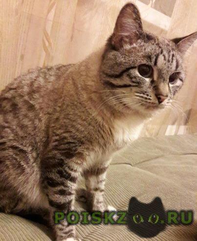 Пропала кошка сиамский полосатый кот г.Нижний Новгород