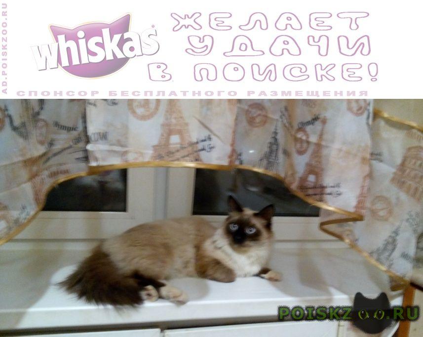 Пропал кот, помогите пожалуйста г.Фрязино
