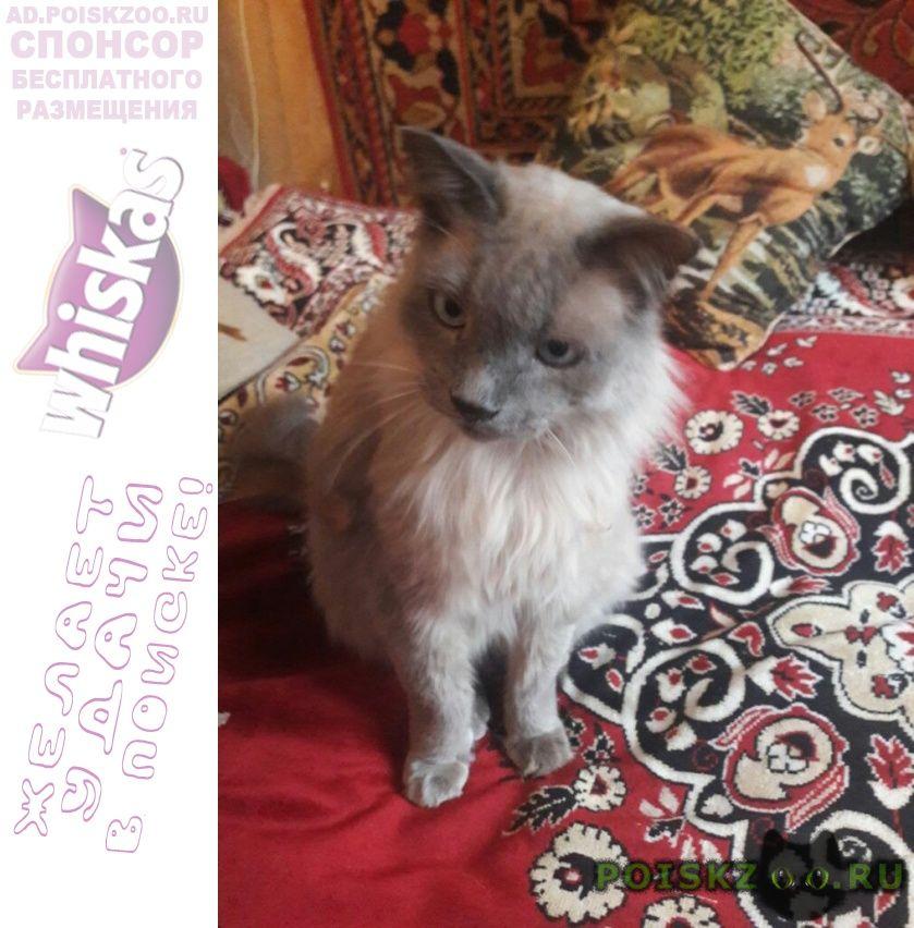 Пропал кот серый г.Москва