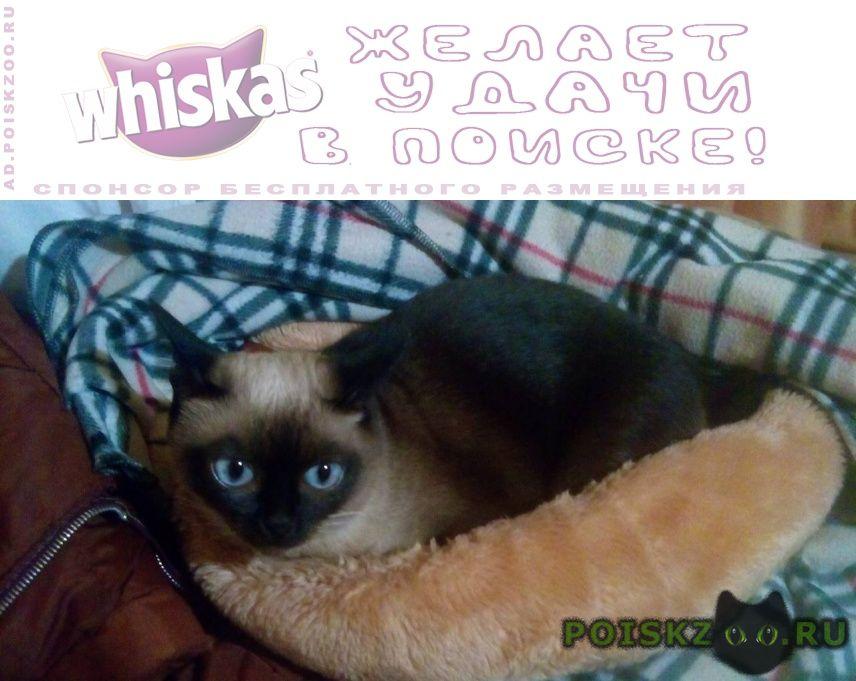 Пропала кошка сиамская кошечка г.Псков