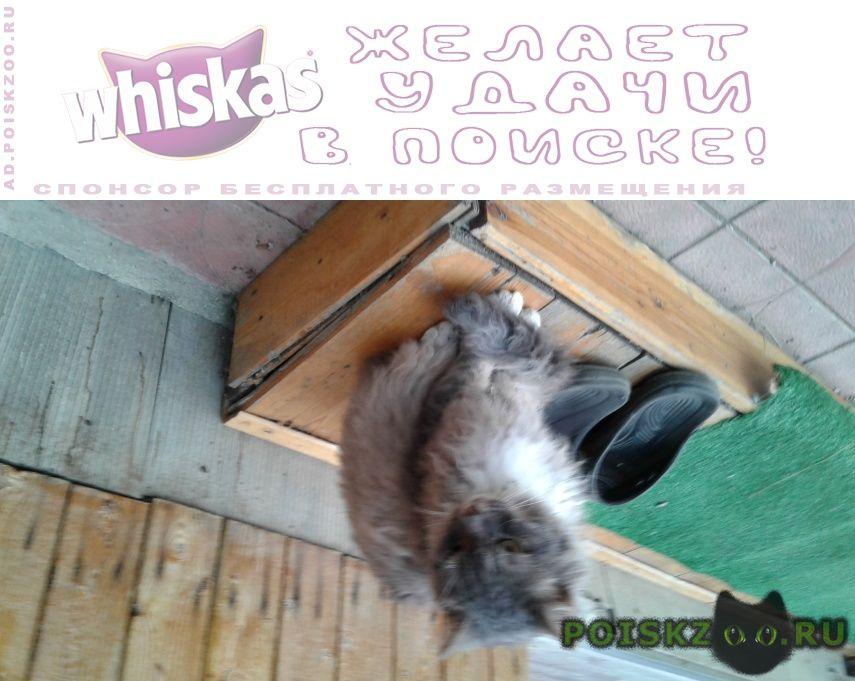Пропал кот г.Саратов