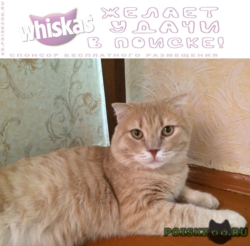 Пропал кот за вознаграждение г.Аксай (Ростовская обл.)