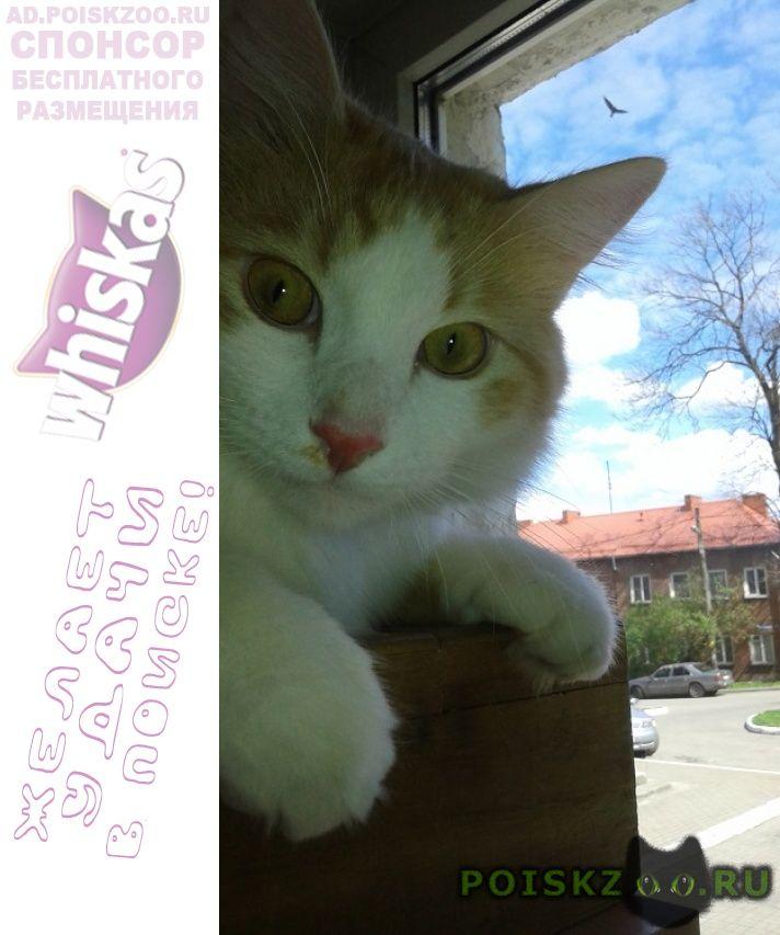 Пропал кот. г.Калининград (Кенигсберг)