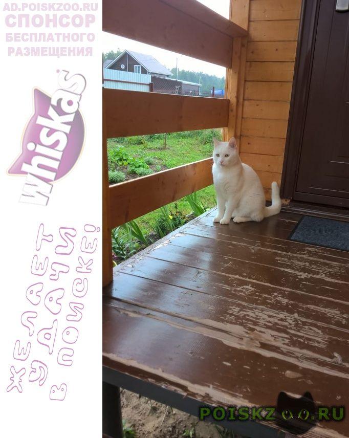 Пропал кот г.Киржач