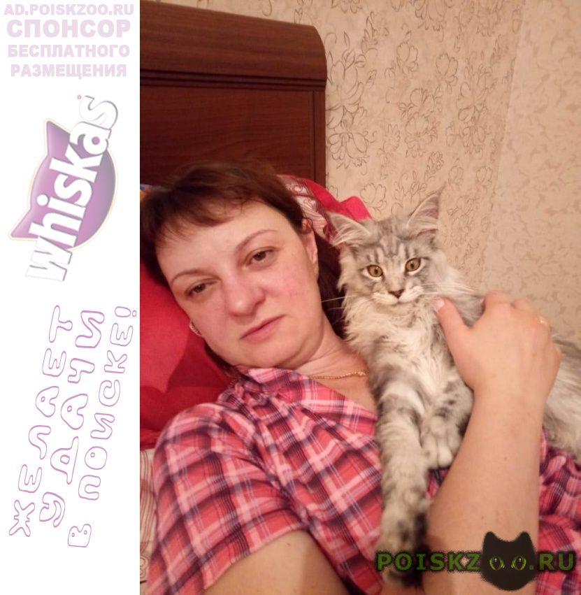 Пропал кот в е вознаграждение гарантируется г.Ногинск