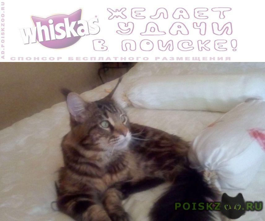 Пропал кот породы мейн-кун г.Нальчик