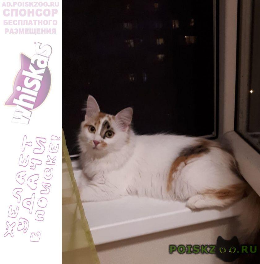 Пропала кошка одинцовский район г.Одинцово