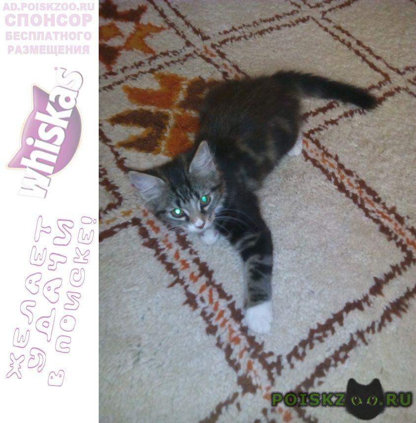 Пропал котёнок филя 3 месяца г.Неман