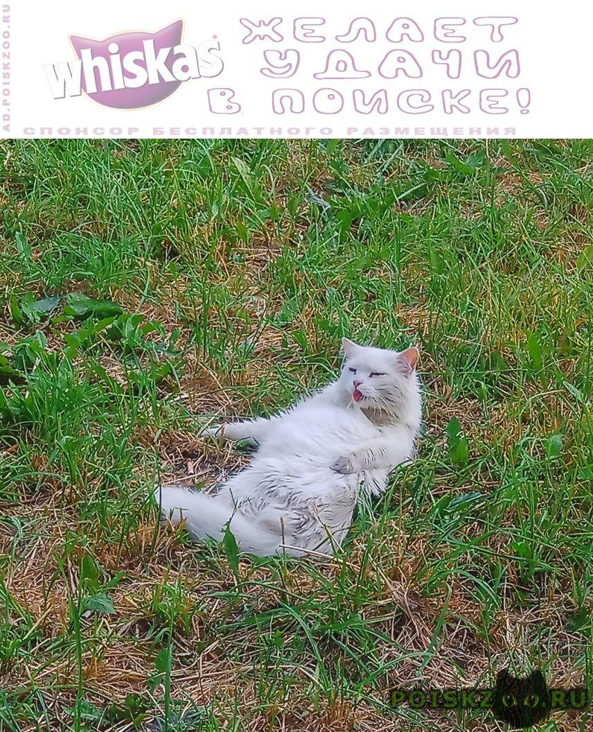 Пропал кот белый г.Санкт-Петербург