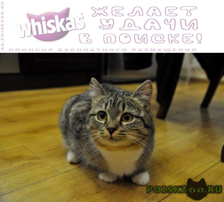 Пропала кошка потерялась г.Жуковский