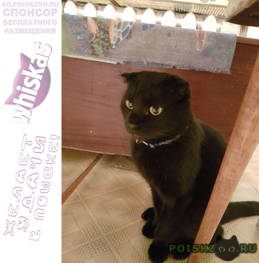 Пропал кот. вознаграждение гарантировано г.Лотошино