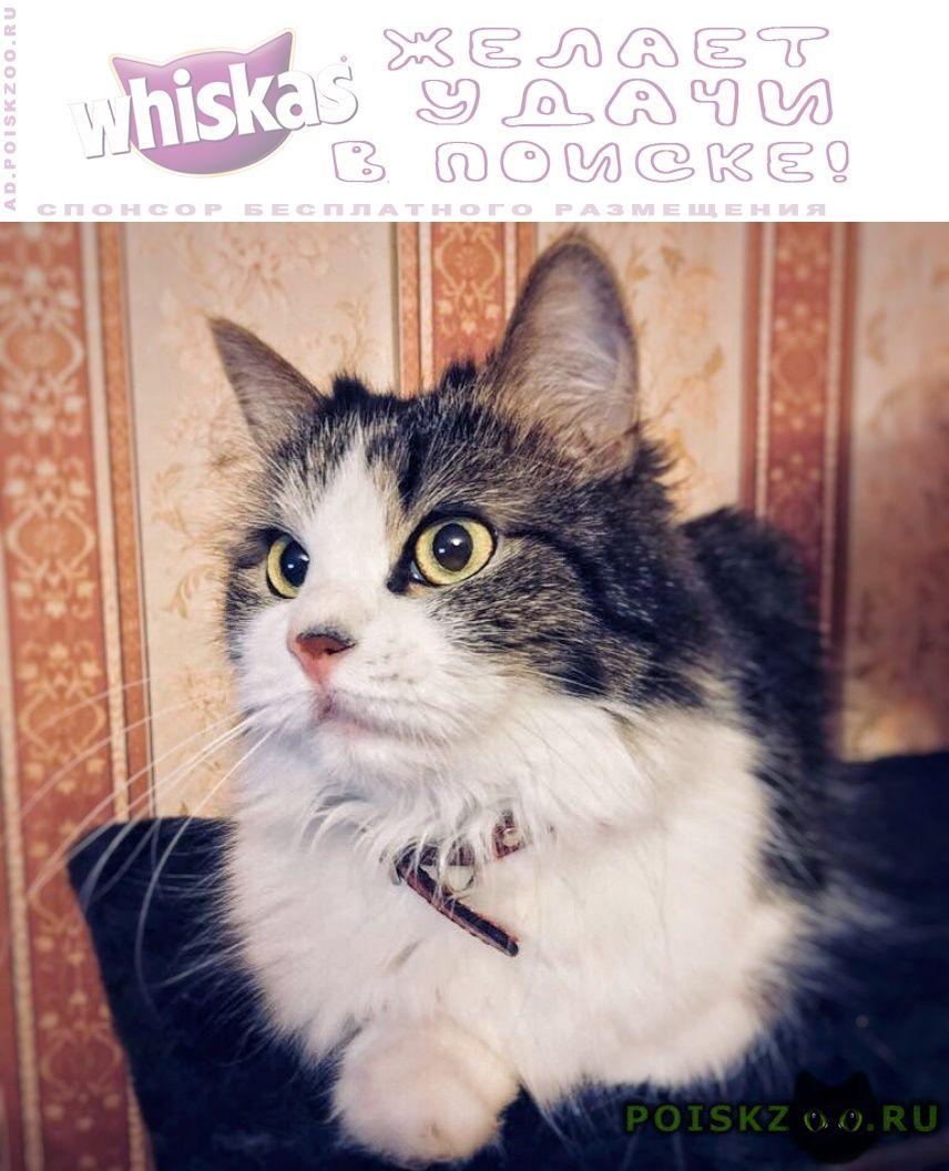 Пропала кошка награда 5000 руб. г.Москва