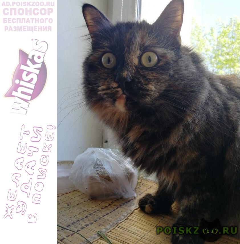 Пропала кошка верните за вознаграждение г.Химки