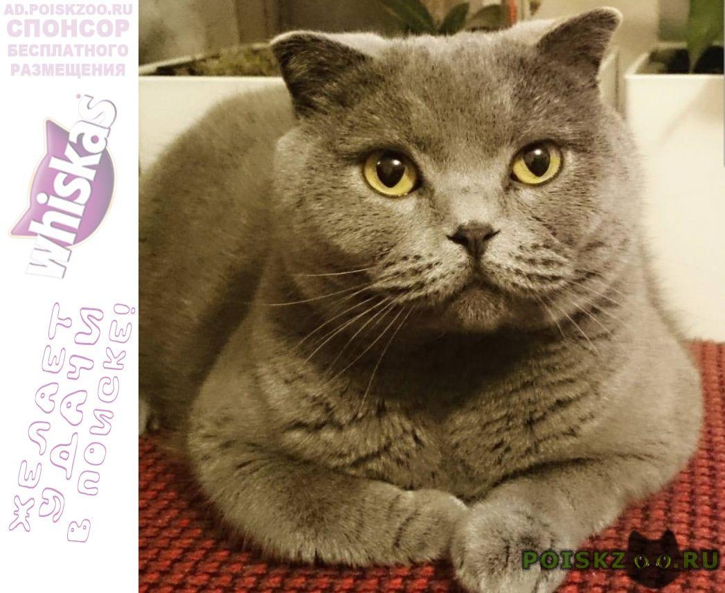 Пропал кот британец г.Домодедово