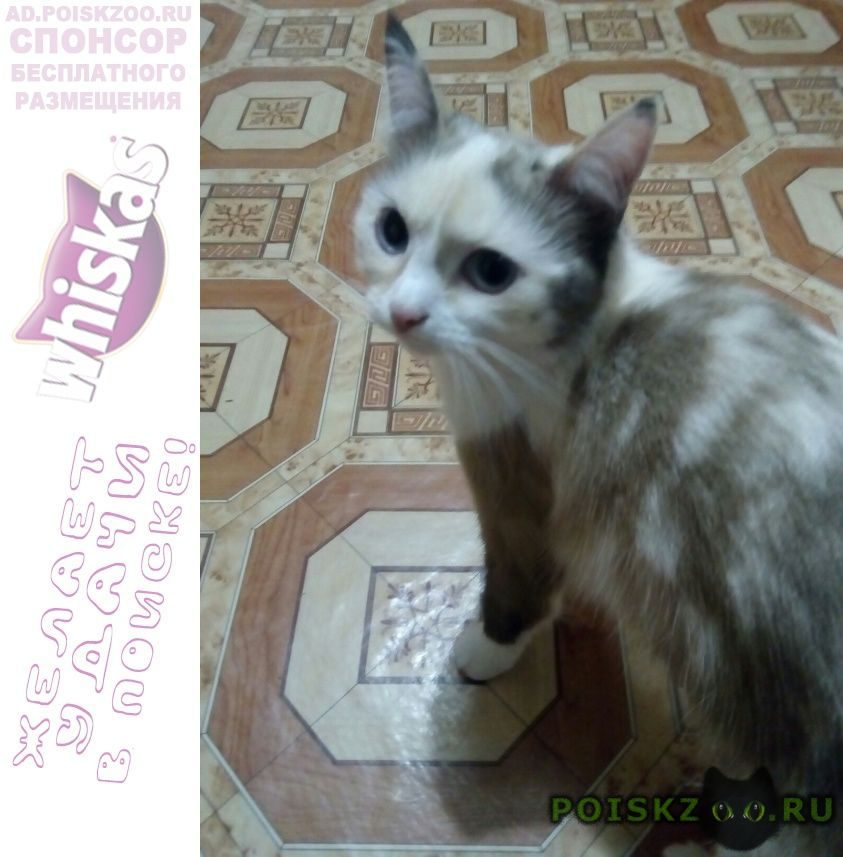 Пропала кошка г.Октябрьский (Башкирия)