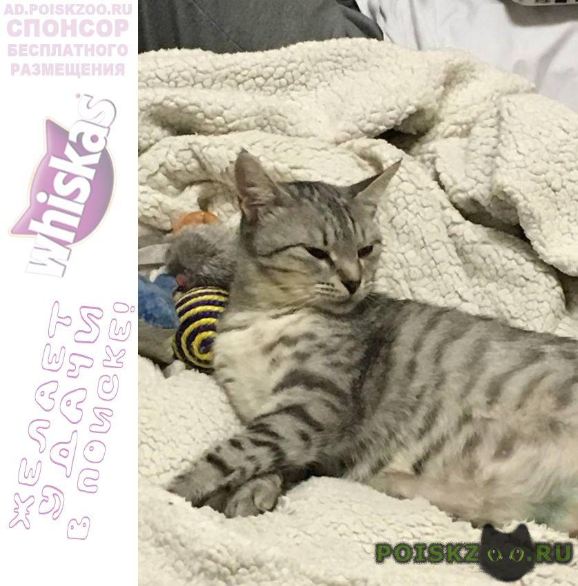Пропала кошка мотя г.Подольск