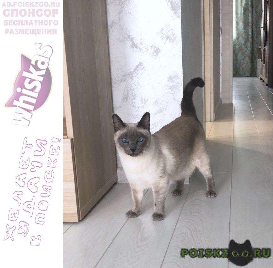 Пропала кошка г.Боровск