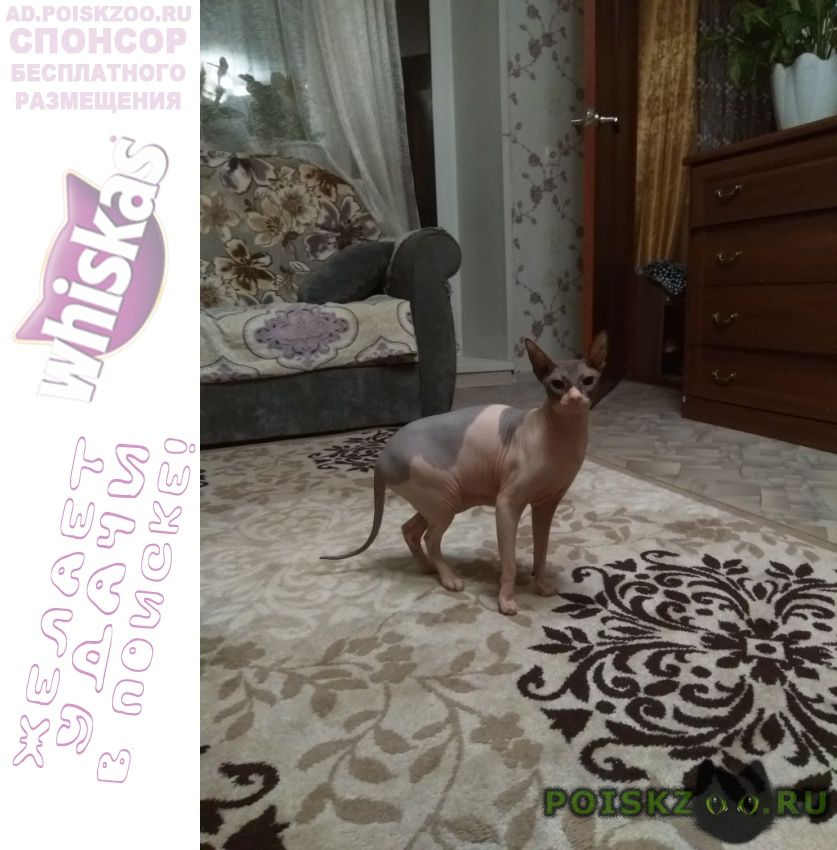 Пропала кошка в районе свечного г.Томск