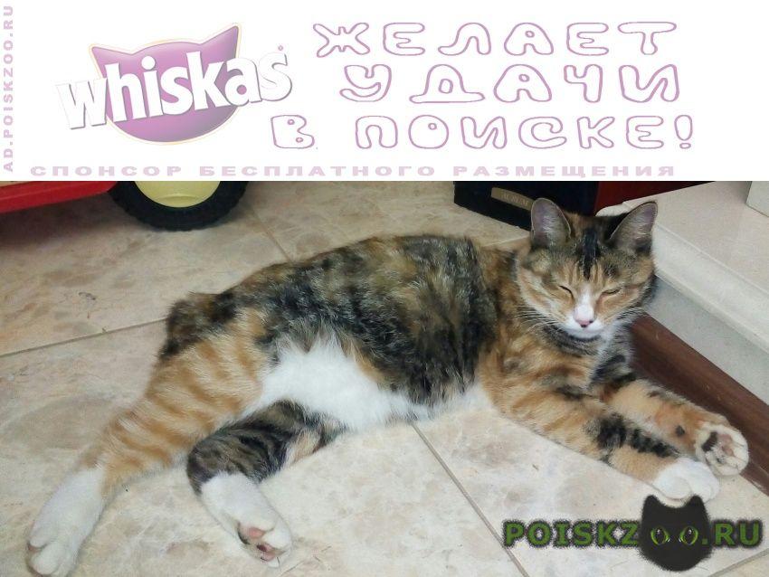 Пропала кошка 5 августа г.Калуга