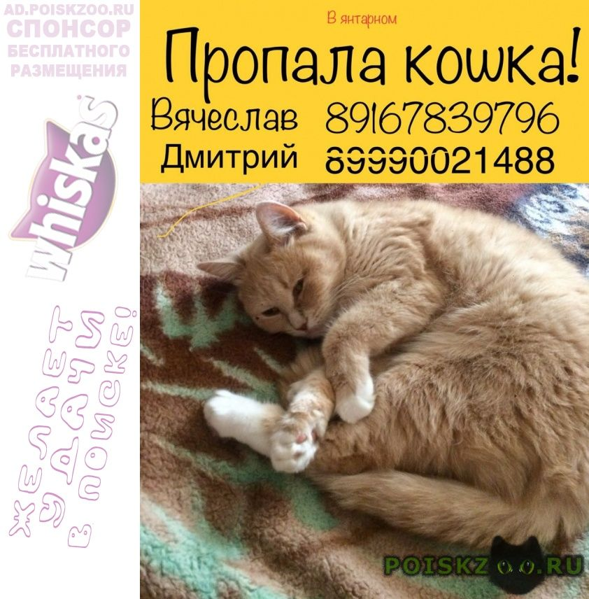 Пропала кошка 15.08. г.Балашиха