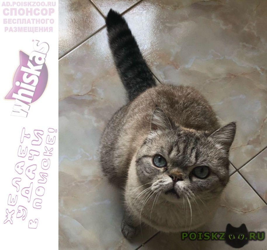 Пропал кот. родники. г.Одинцово