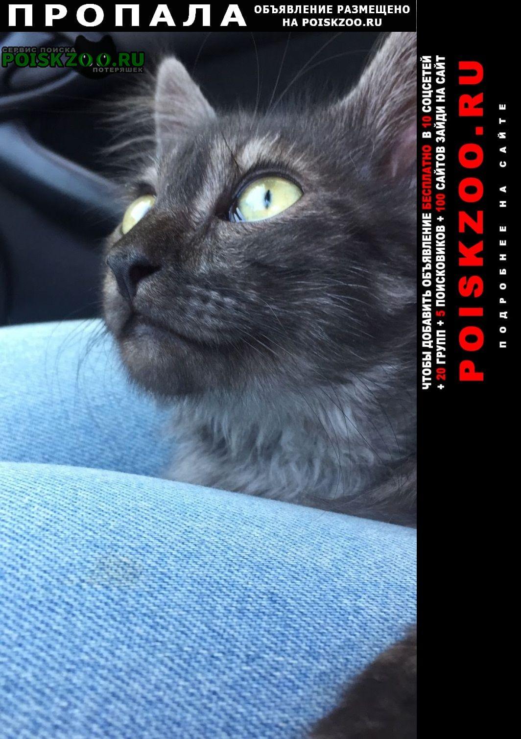 Черкассы Пропало домашнее животное кот