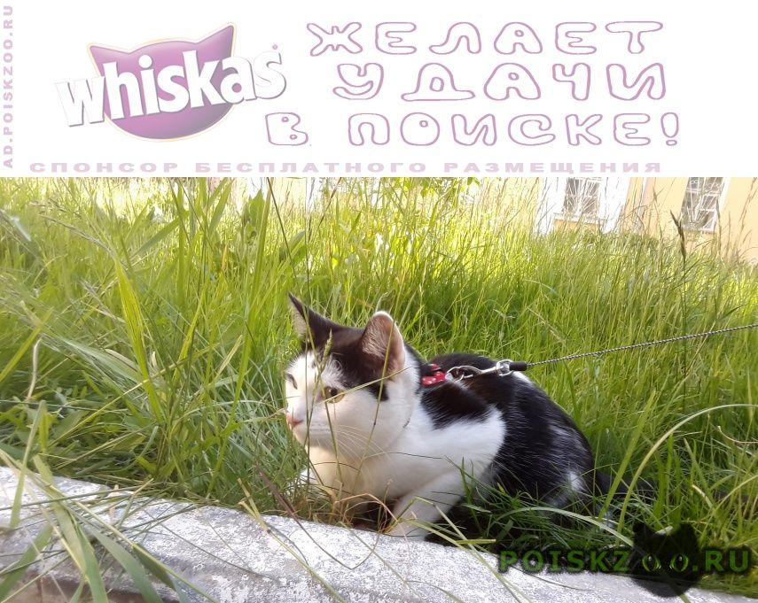 Пропала кошка г.Дзержинск