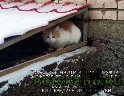 Пропала кошка кот г.Гатчина