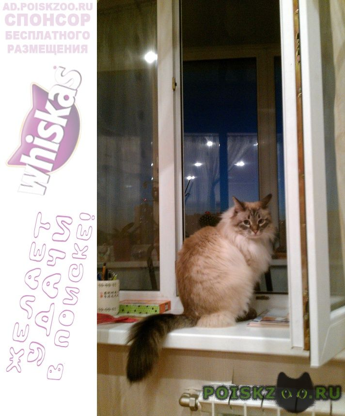 Пропал кот невский маскарадный г.Солнечногорск