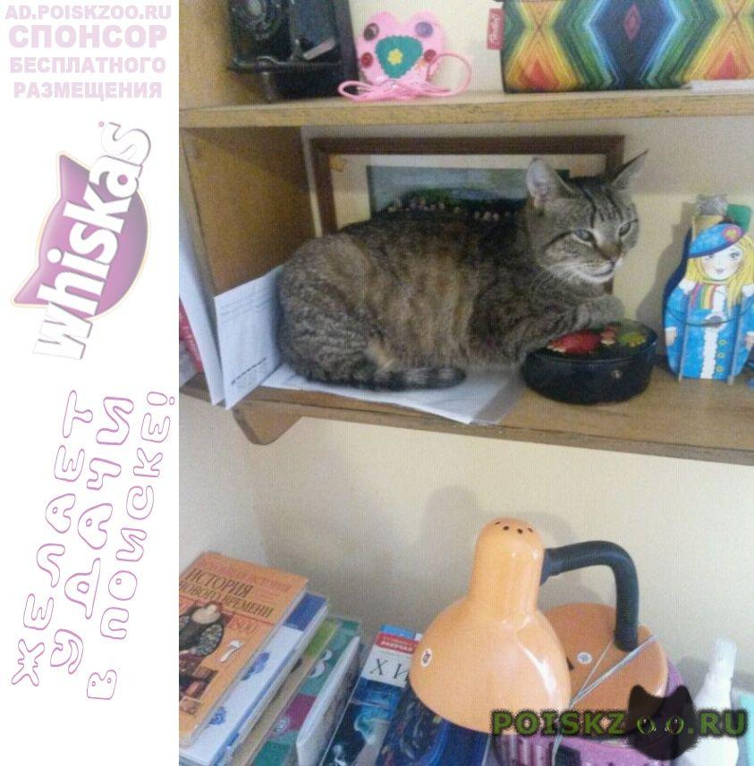 Пропала кошка г.Орел