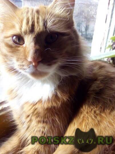 Пропал кот рыжий  г.Севастополь