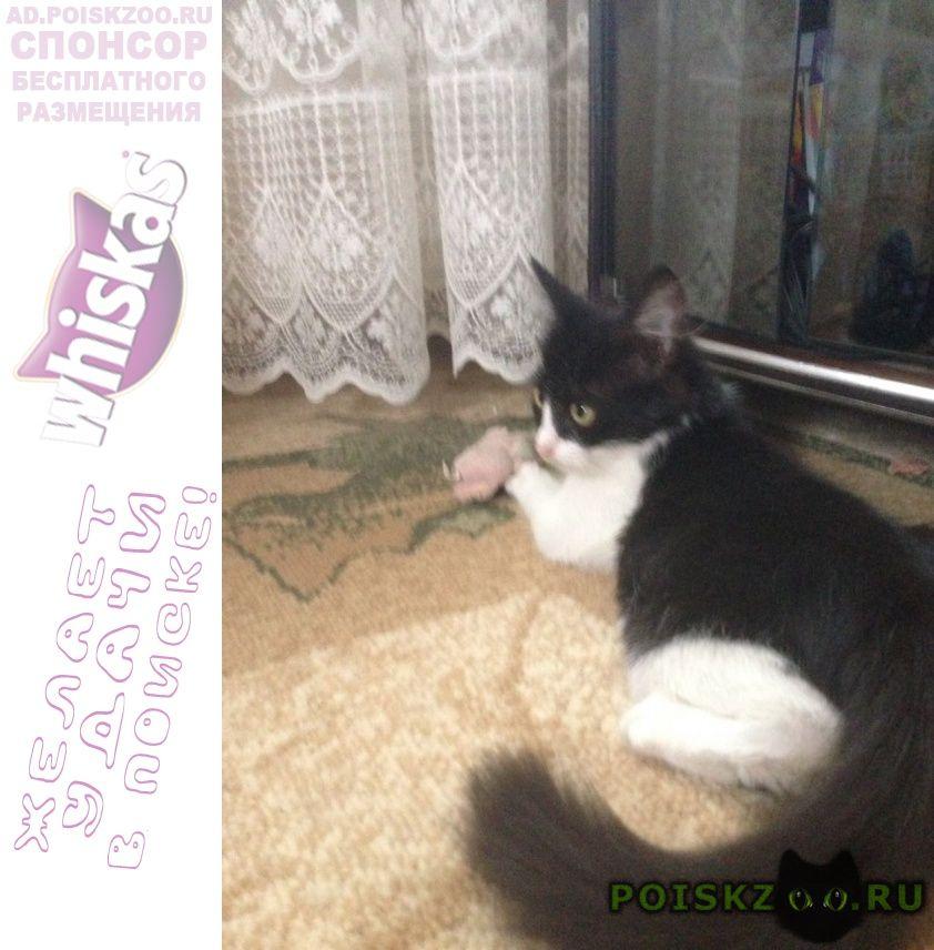 Пропала кошка г.Батайск