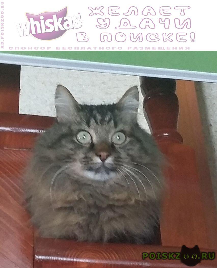 Пропал кот г.Бугульма