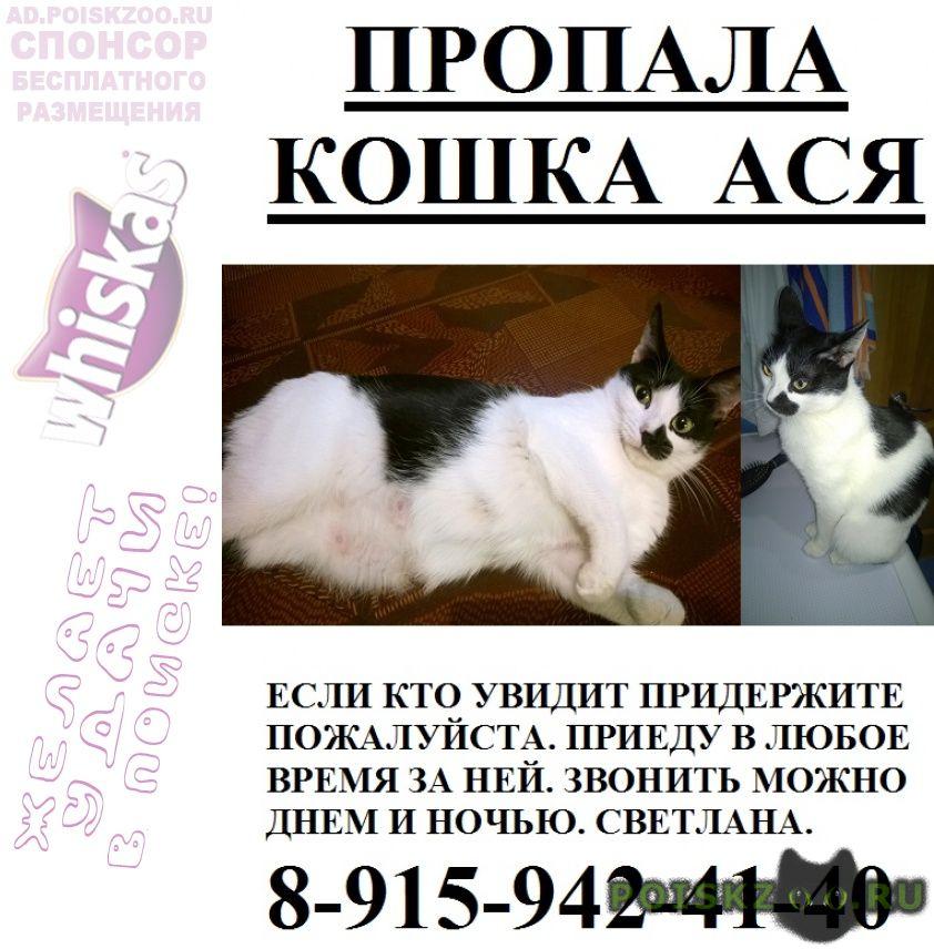 Пропала кошка г.Нижний Новгород