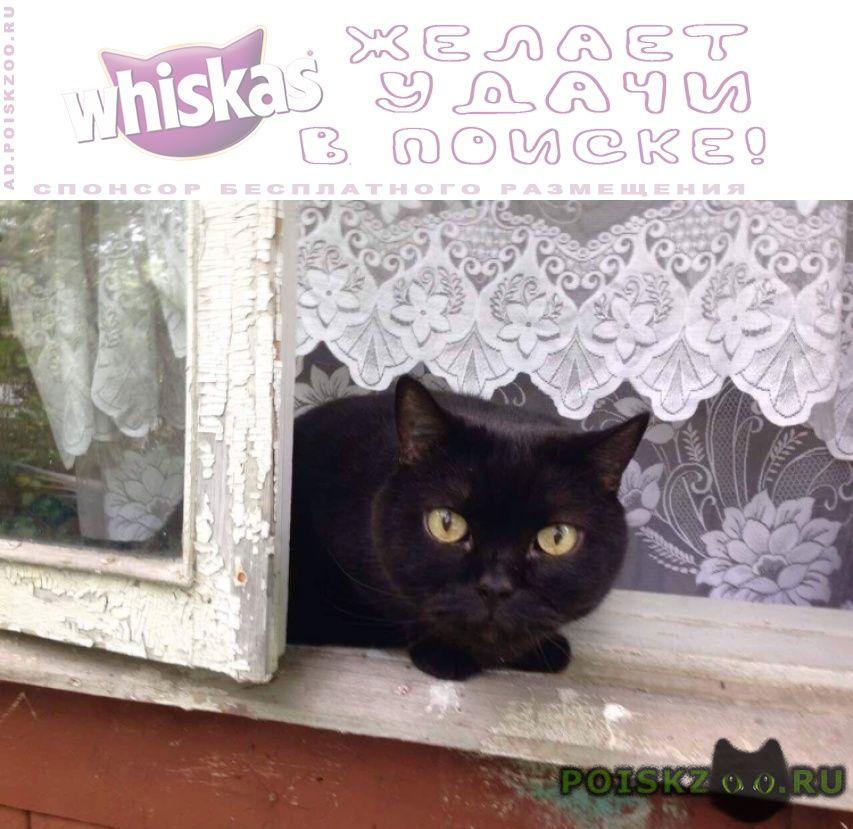 Пропал кот  поварово, снт восход г.Зеленоград